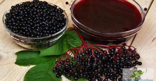 Настій з цвіту чорної бузини — цілющий подарунок нам від природи!